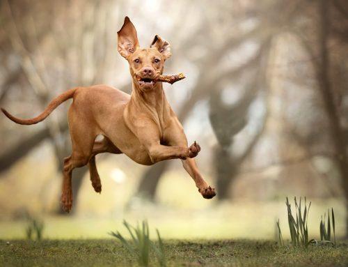 Топ 10: Най-скъпите породи кучета