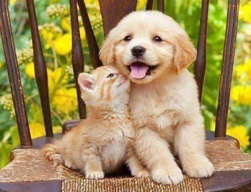 Ваксинация, обезпаразитяване, кастрация – 10 съвета при взимане на първо куче или котка