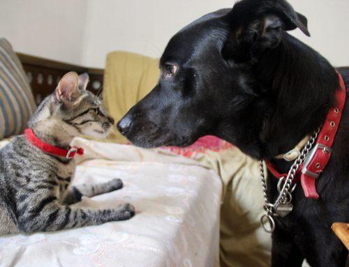 Куче или коте – какво трябва да знаем при избора на домашен любимец?